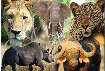 Africa Tourism: Africa is home to the big 5