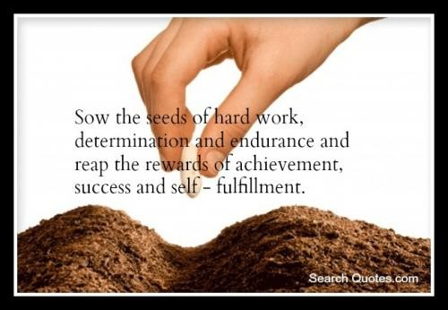 sow the seeds