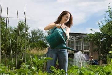 Water your garden in order to succeed in life