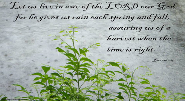 We are assured of full harvest in the Lord