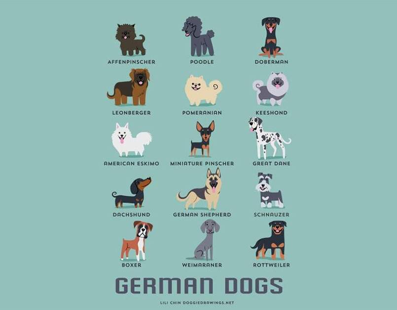 dogs-of-the-world-lili-chin-alemania