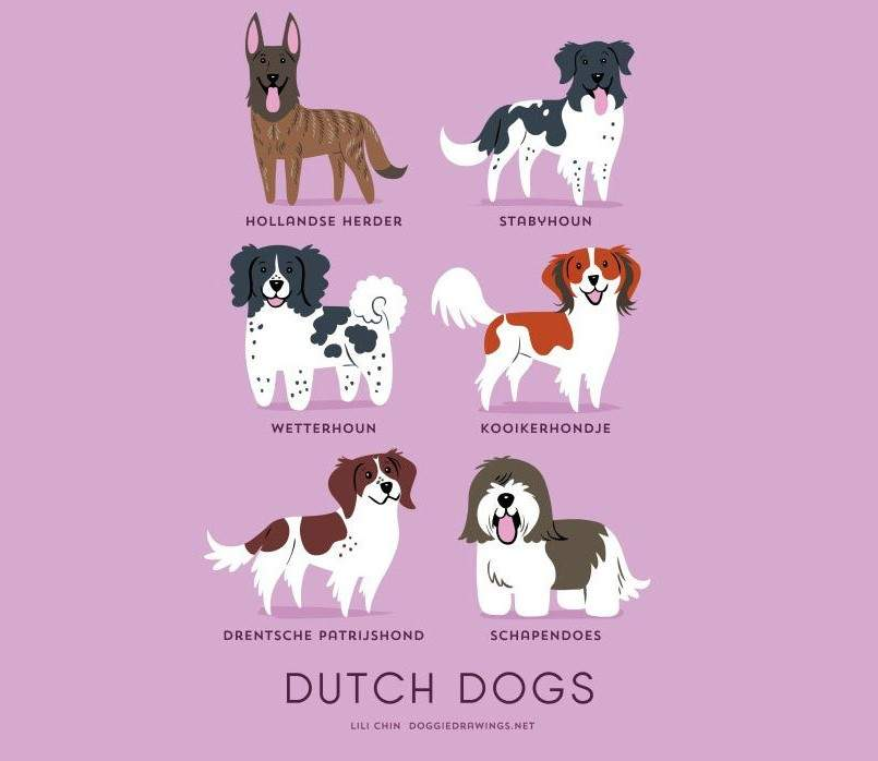 dogs-of-the-world-lili-chin-holanda