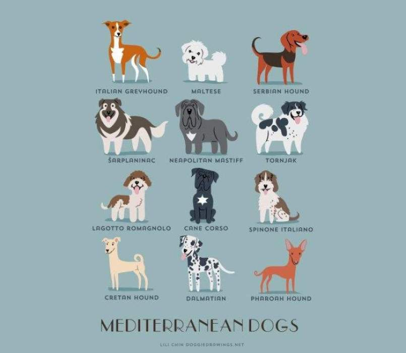 dogs-of-the-world-lili-chin-mediterraneo