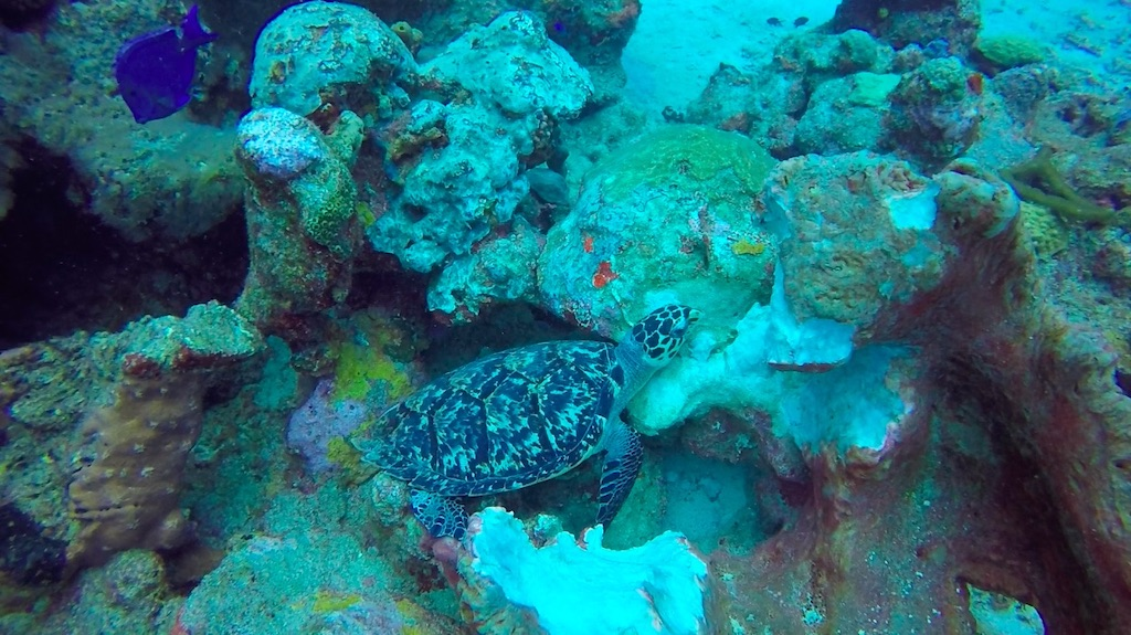 Guadeloupe | Jaques Cousteau National Reserve
