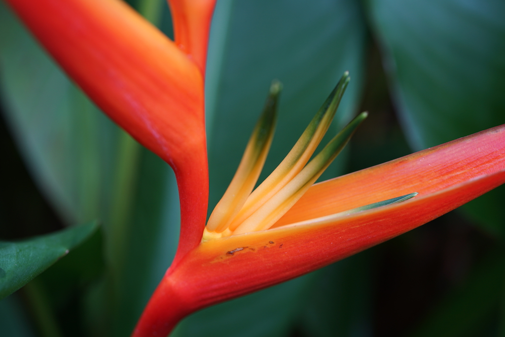Guadeloupe   Jardin Botanique