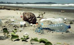 animales-son-hallados-muertos-por-desechos-plasticos