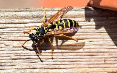 Prevenir y tratar las picaduras de insectos