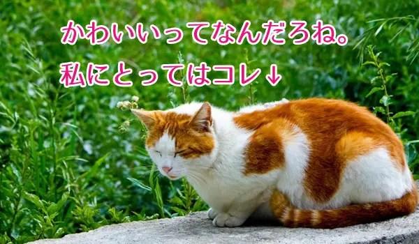 ネコ以上にかわいい存在はいない