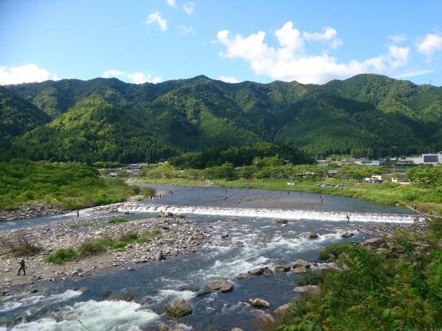 板取川,長良川,鮎