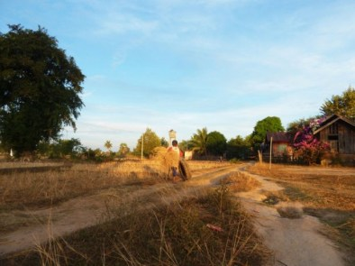 Laos, Don Det, champ de riz