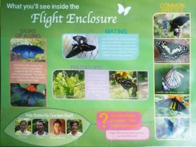 Kep butterfly farm dans la jungle