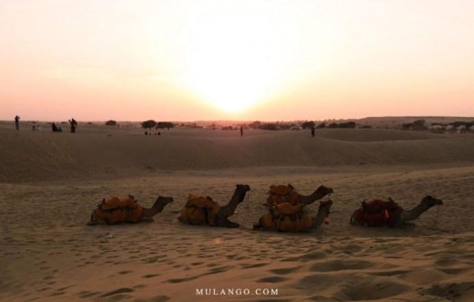 Safari dans le désert du Thar