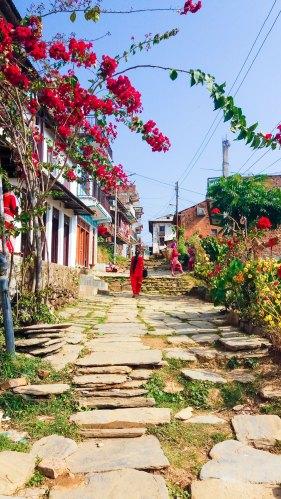 Les bougainvilliers dans les ruelles de Bandipur