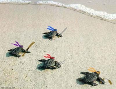 ninja turtles into the water