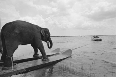 elephant crossing water