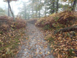 28-10-2016-fontainebleau-par-etienne-lnquetin-014