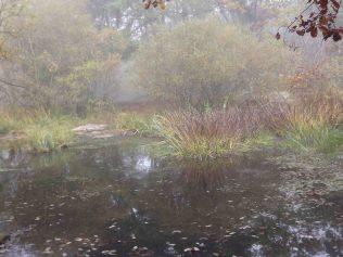 28-10-2016-fontainebleau-par-etienne-lnquetin-033