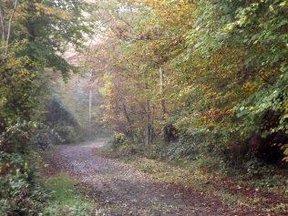 28-10-2016-fontainebleau-par-etienne-lnquetin-038