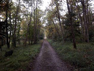 28-10-2016-fontainebleau-par-etienne-lnquetin-056