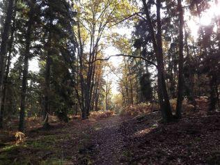 28-10-2016-fontainebleau-par-etienne-lnquetin-065