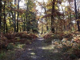 28-10-2016-fontainebleau-par-etienne-lnquetin-081