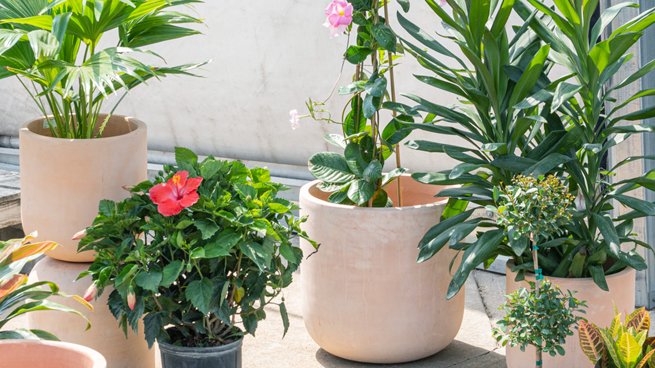 our favorite plants for the patio
