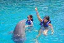 Vá de adestradora de golfinho!