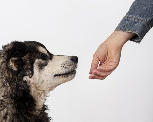 Pets: Cães treinados para farejar Covid-19