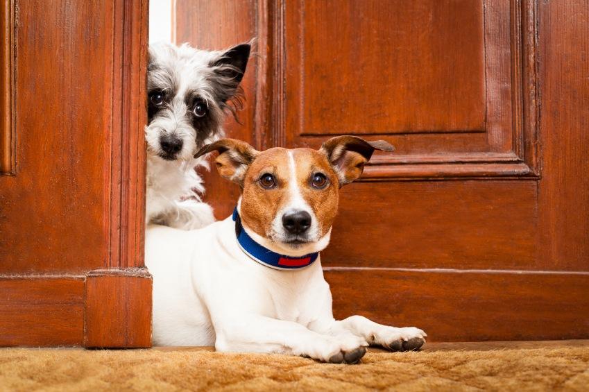 Como adaptar seu pet em um novo lar?