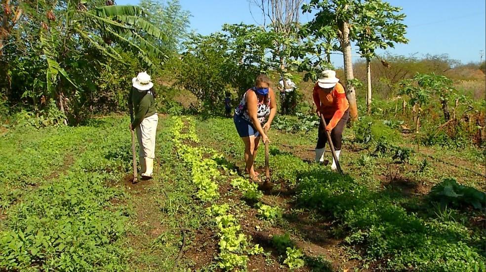 #05 – Acesso a saberes e inovações rurais: Melhores condições de vida