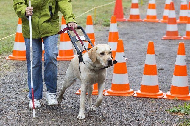 Cães de serviço para saúde