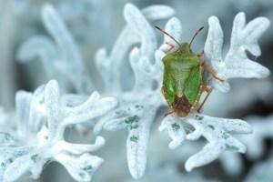 تفسير حلم حشرات تخرج من الجسم
