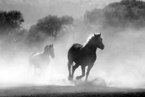 تفسير الحصان في الحلم للبنت