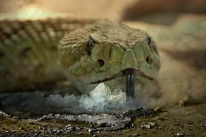 رؤية الثعابين الصغيره في المنام