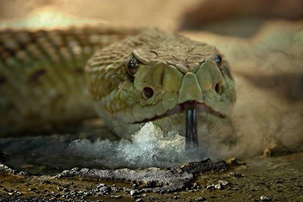 رؤية الثعابين الصغيره في المنام 2021 موقع ملخص