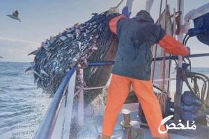 تفسير حلم صيد السمك بالشبكة