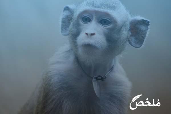 ما تفسير رؤية القرد الصغير في المنام 2020 موقع ملخص