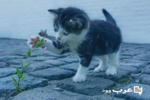 تفسير حلم قطة تلد في المنام