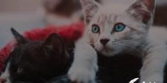 تفسير رؤية قطط تتزاوج في المنام