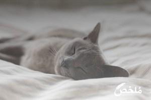 علاج تساقط الشعر لدى القطط
