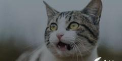 أمراض القطط الخطيرة