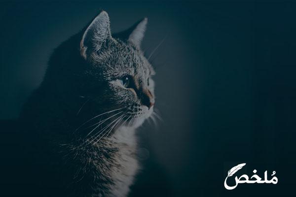 علاج القطط من الترجيع
