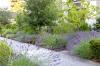 Lavender Walkway