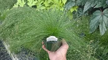 """4.5"""" Fiber Optic Grass"""