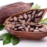 Khasiat dan Manfaat Biji Kakao/ Cokelat
