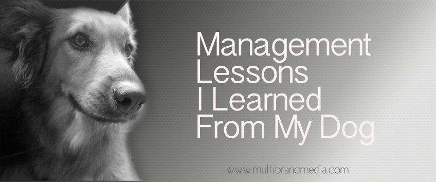 management lessons I learned from my dog. Our professional careers often span decades. During that time, we try everything under the sun to stay on top of our chosen paths, so that we might improve ourselves, provide for a more rewarding lifestyle, or simply keep our heads above water.