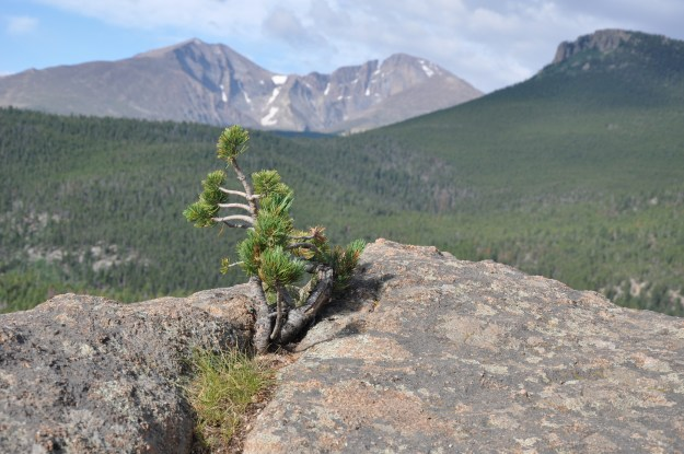 Planted in the crag, in the Rocky Mountains of Colorado.