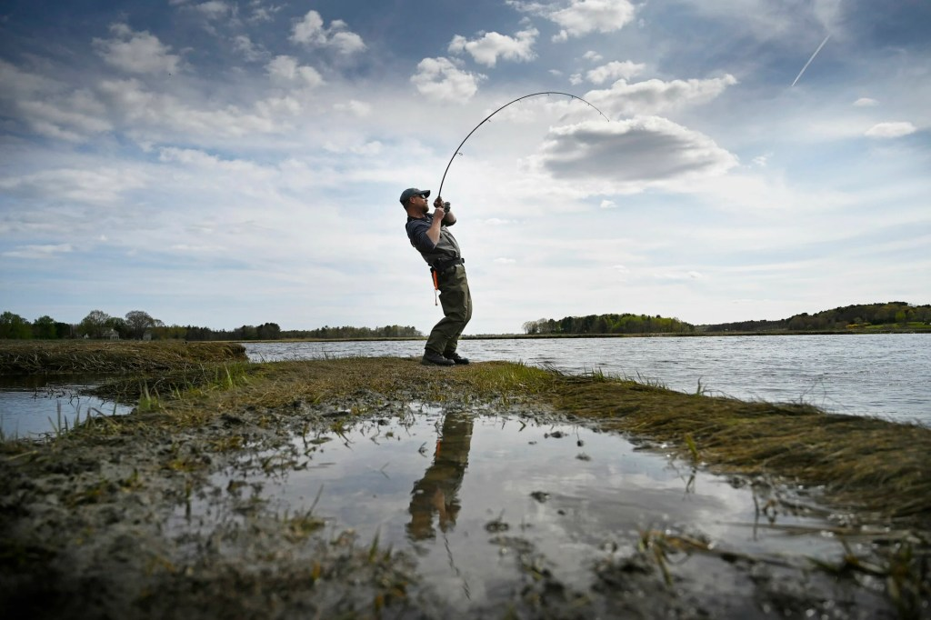 Mike Giroux catches a striped bass while fishing in the Scarborough Marsh in late May. This spot is near the Clay Pits Road boat launch, one of the many choice striper fishing spots on the Nonesuch River.