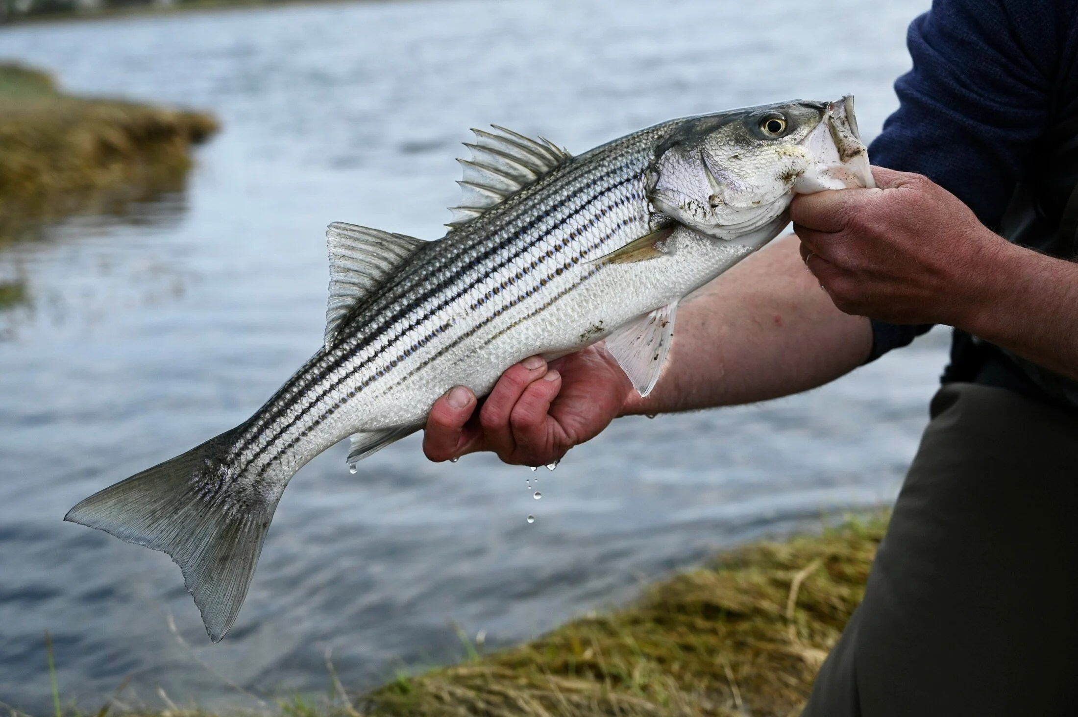 A fish-crazed Mainer points us toward some of the best spots