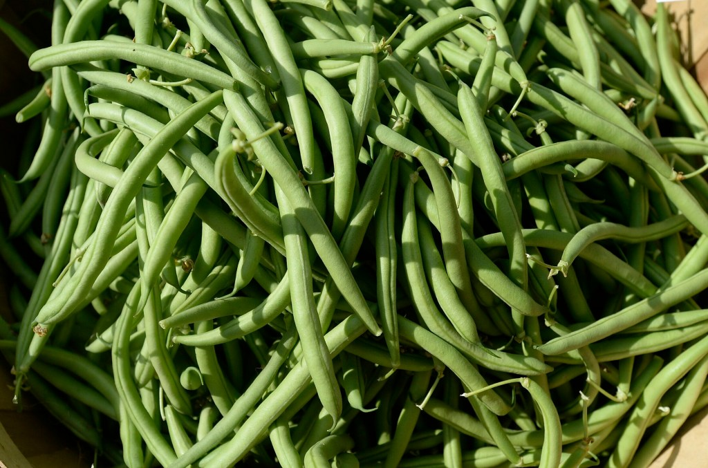 Local green beans are ready about now, but Maine Gardener columnist Tom Atwell is not a fan.